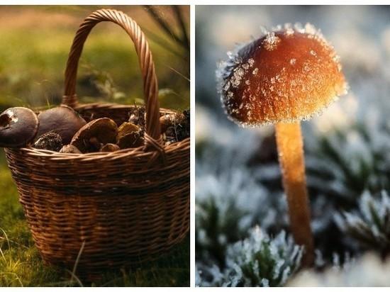 Некоторые съедобные грибы признаны опасными для здоровья