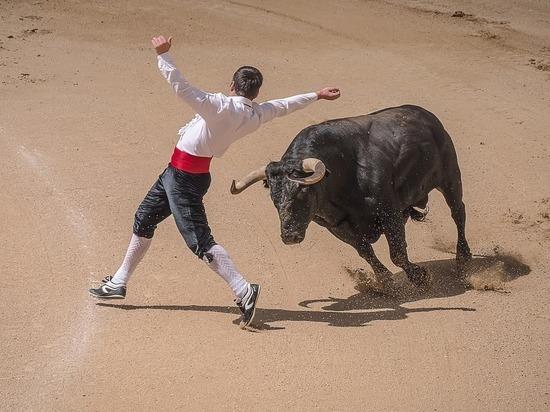 Самый большой и дорогой в мире бык живет в Испании