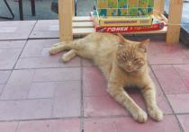 В Тверской области был зверски убит кот Степан Библиотечный — любимец жителей Городни и общероссийская знаменитость