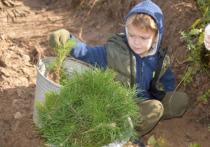В Марий Эл дети начали акцию «Сохраним лес – 2020»