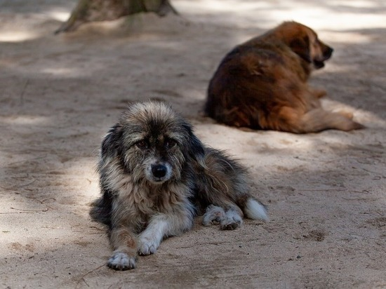 В Орле появится приют для бездомных собак