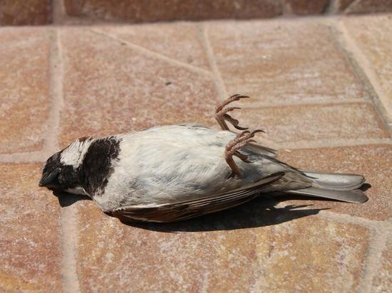 Массовая гибель птиц напугала новосибирцев