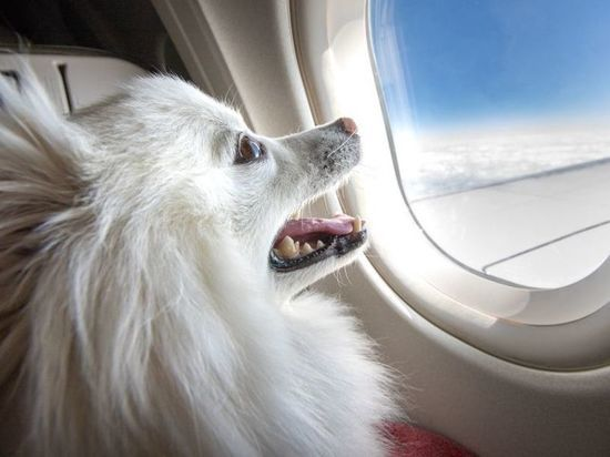 Подростки из Тверской области не смогут летать с питомцами на самолетах