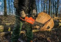 В Забайкалье заявили о снижении «черных» рубок леса на 25%