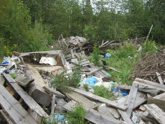 В Кувшиновском районе собственник продолжает игнорировать предписания Россельхознадзора