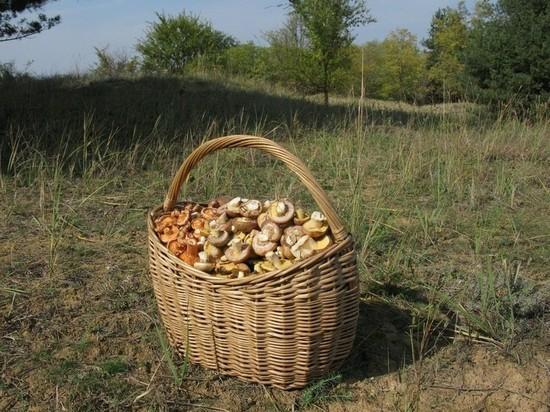 Какие съедобные грибы могут быть смертельно опасны