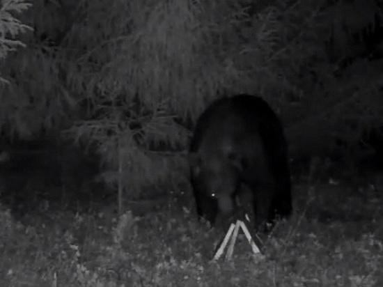 Фотоловушка удмуртского пчеловода засняла медведя