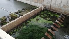 В Краснохолме пересохла река