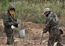 Сотрудники правительства Марий Эл высадили лес