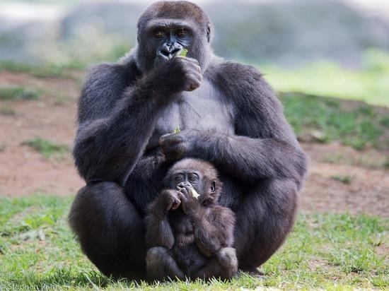 Федеральный суд Швейцарии разрешил закрепить в конституции Базеля права приматов