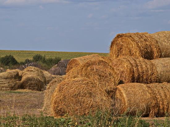 Агрокомплексы Тверской области заготовили сено