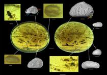 Древнейший образец спермы удалось обнаружить археологам