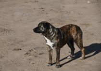 В Волгограде найдено истерзанное собаками тело женщины