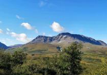 На Ямале локализовали все лесные пожары