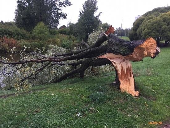 Из-за шторма в Петербурге закрыли сады и скверы