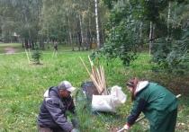 В парке Йошкар-Олы высадили деревья