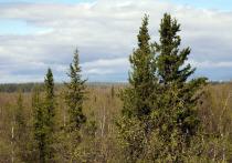 Глава ЯНАО поздравил работников леса с профессиональным праздником