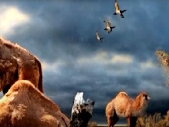 В Канаде обнаружена ДНК верблюда ледникового периода