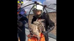 В Москве спасли сову, застрявшую в проводах: видео