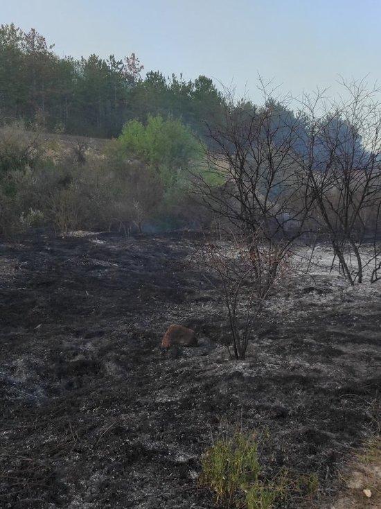 В Севастополе пожар уничтожил 1,5 гектара леса