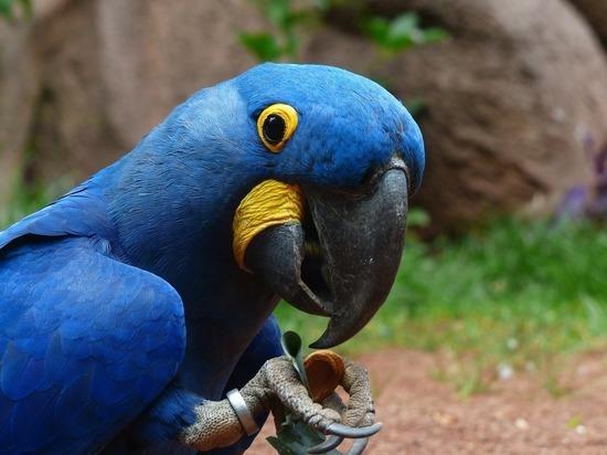 Попугай атаковал сборную Бразилии, а альпака вышла на поле в Йоркшире