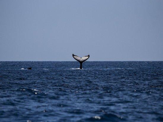 В Австралии на берег выбросились около 270 китов