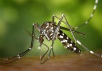 Новое исследование обнаружило связь между распространением коронавируса и прошлыми вспышками лихорадки денге