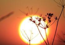 День осеннего равноденствия в Северном полушарии в этом году наступил 22 сентября