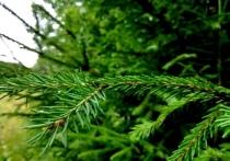 Как на Вологодчине поддерживают экологию
