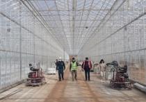 Плановая проверка тепличного комбината в селе Турово городского округа Серпухов проведена специалистами Госстройнадзора МО.