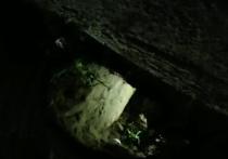 Из колонии в Дагестане через подкоп сбежали шестеро заключенных - кадры прорытого ими одземного хода впечатляют