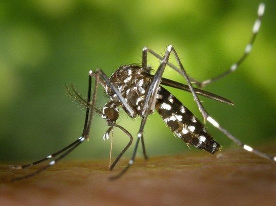 В Турции появились новые смертельно опасные комары