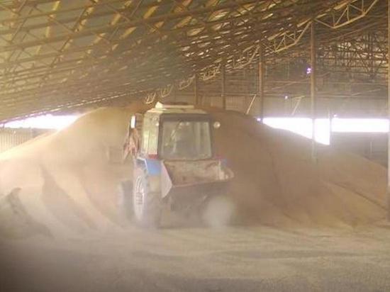 Bloomberg: Россия увеличивает свою долю на мировом рынке пшеницы