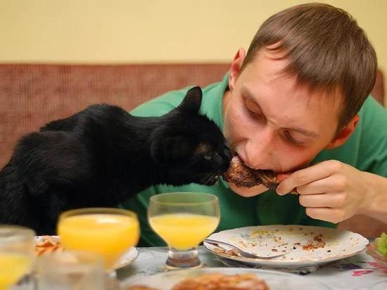 Семья с котом выживает на МРОТ в Новосибирске: основы экономии