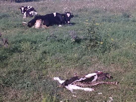 В Орловской области на территории летнего лагеря обнаружены трупы  больных животных