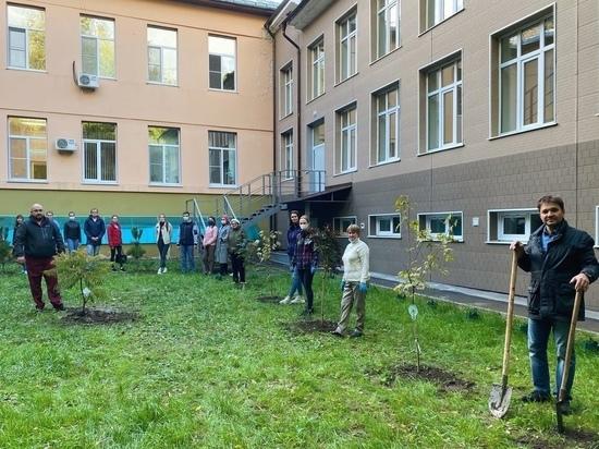 На территории больницы Семашко высадили деревья