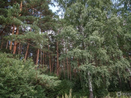 В Кузбассе для улучшения экологии создадут лесопарковые пояса