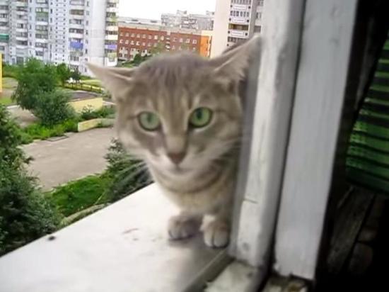 Выбросившего кота с 7 этажа жителя Пензы оштрафовали