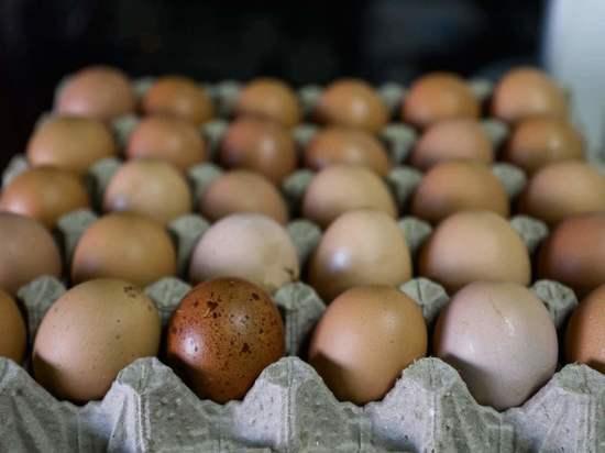 Названа полезная альтернатива куриным яйцам