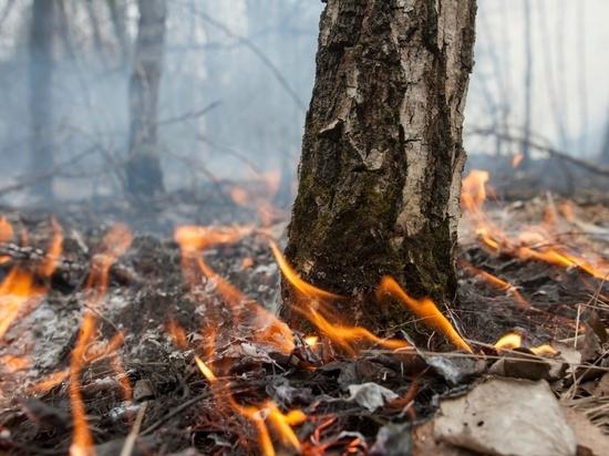 Костромские синоптики утешают МЧС: «Не сгорим!»