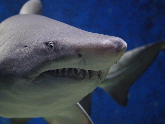 Беременная женщина спасла супруга от смерти в пасти акулы