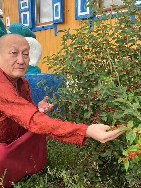 Хамбо лама попросил бурятских филологов из БГУ ему не мешать