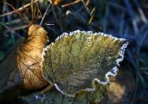 Волна ночных заморозков накроет Новосибирскую область с понедельника, 28 сентября