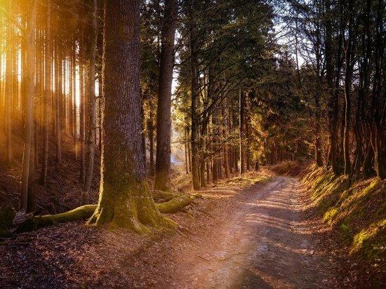 Новый пешеходный маршрут появится в Рязанской области