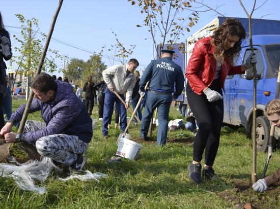 В центре Иванова появилась новая аллея из тридцати деревьев
