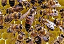 В аэропорту Краснодара задержали 40 пчелиных маток
