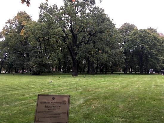 28 сентября 2020 года завершилось исследование возраста деревьев, растущих в Михайловском и Летнем садах Санкт-Петербурга