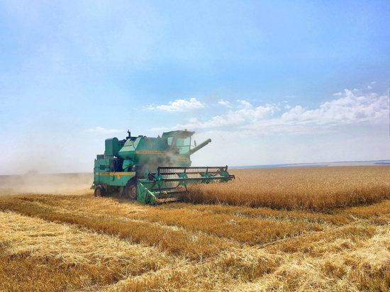 Ивановским аграриям есть, чем гордиться: урожайность зерновых превышает 25 центнеров с гектара