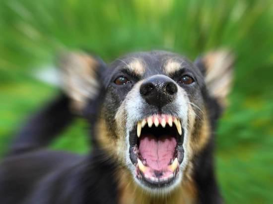 Жительница Тверской области узнала о бешенстве своего пса