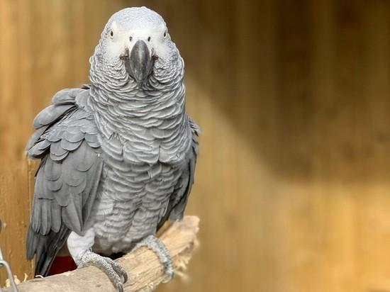 Попугаи-матершинники атаковали британский зоопарк: скоро будет 250 ругающихся птиц